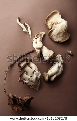 Oyster mushrooms on brown background. Natural lighting. Monochromatic concept #1012109278
