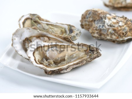 Oyster oyster image #1157933644