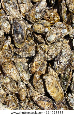 Oyster shells backgound - Sea food texture