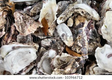 Oyster shells background in Hiroshima, Japan - typical cuisine of Chugoku region
