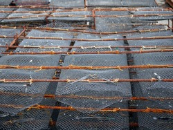 Oysters growing traps close up,  Food supply chain industry,