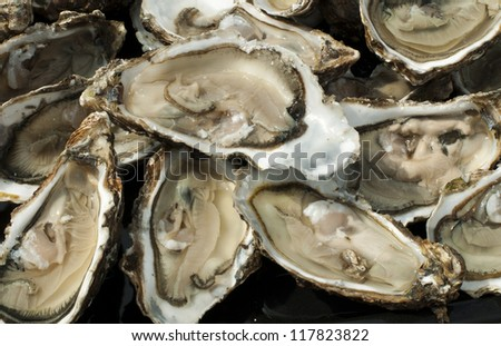 Oysters on a silver tray close up.