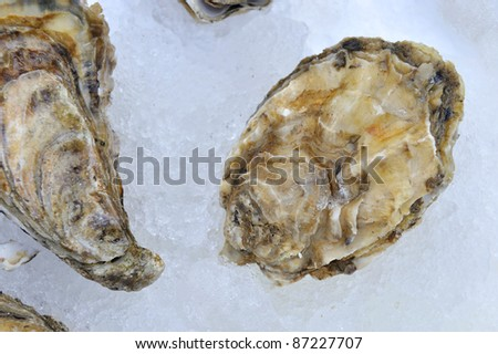 Oysters on ice at a market in France