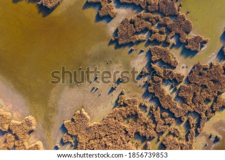 Pákozd, Hungary - Aerial view of reeds texture at lake Velence Stock fotó ©