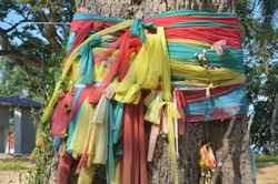 Pa Jed Si or 7 different colored fabric ropes,tied around old big tree to express respect to superspirituals posting in the gree and guarding surroundigna area, traditional belief of local Thai people