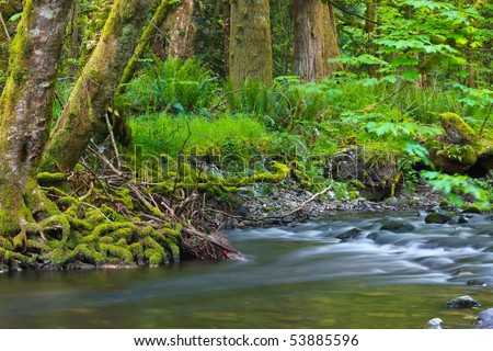 Pacific North West rain-forest setting with a beautiful stream in the foreground.