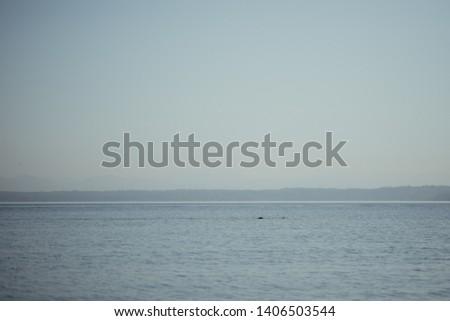 Pacific Northwest beach, PNW, ocean #1406503544