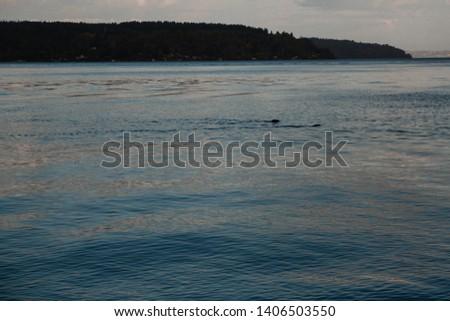 Pacific Northwest beach, PNW, ocean #1406503550