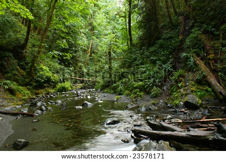 pacific northwest rainforest  Pacific northwest rainforest creek