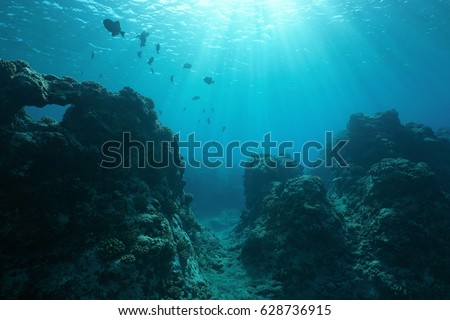 Pacific ocean floor underwater seascape with some fish and natural sunlight through water surface, fore reef of Huahine island, French Polynesia #628736915