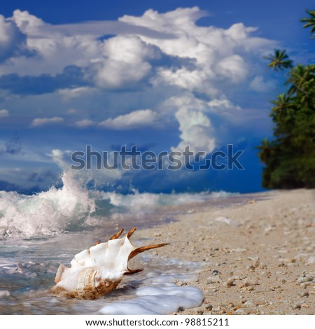 Pacific ocean paradise beach with seashell, foam, splashed waves and beautiful sky