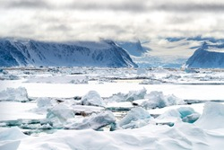 Pack ice in the arctic circle at 80 degrees north, with the mountains and glaciers of Svalbard in the backgound and gulls on the ice in the foreground.