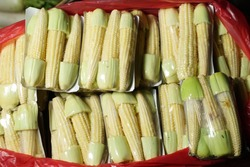 Packaged baby corn that is ready to be sold in the fresh market. Close-up of baby corn. Usually whole cobs for human consumption are eaten raw and cooked. Baby corn for the background.