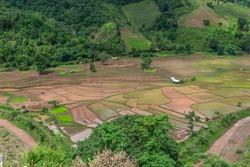 Paddies rice field,Rice Field Terraces, a beautiful natural beauty on mountain in Khun Nan Village.Boklua Nan Province, Thailand