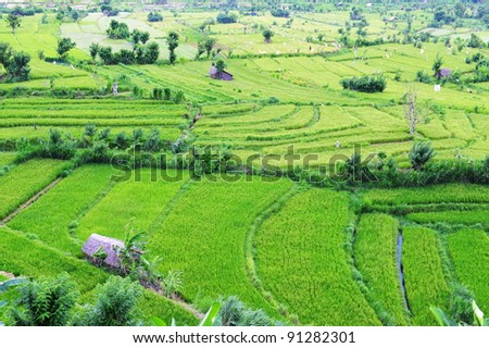 Paddy field and terrace in Bali, Indonesia