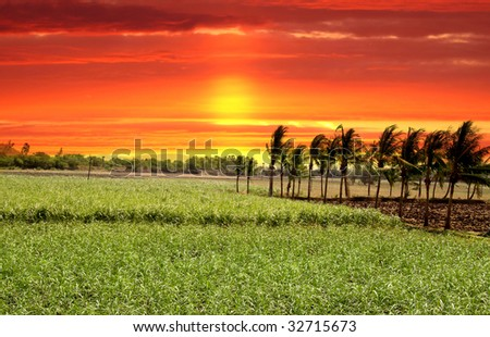 Paddy field in India against bright red skies