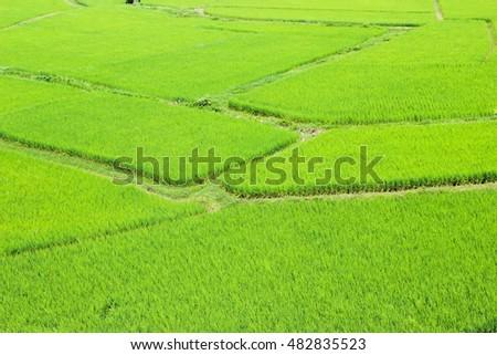 Paddy Field, Nan Province, Thailand #482835523