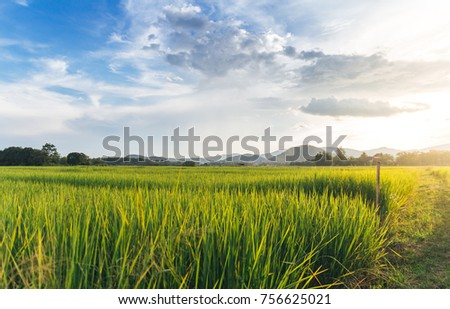 Paddy field with clouds and Sky background #756625021