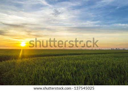 Paddy field with sunrise background