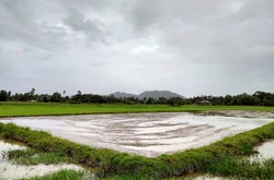 Paddy fields after plowing. Waiting for time to sow rice seeds.