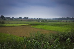 Paddy fields; Rice Fields; Agriculture; Part of the field is sowed and some parts are ready to be sowed. Rice agriculture