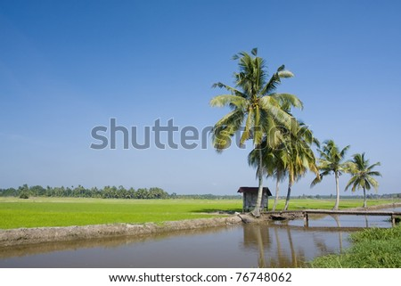 paddy landscape and blue sky