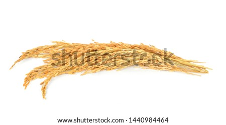 Paddy rice isolated on white background #1440984464