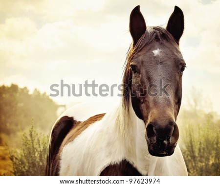 Paint Horse in Pasture