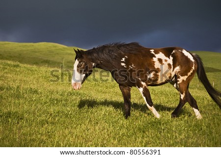 Paint Horse walking in pasture beneath a stormy sky