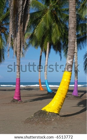 Painted Palms, Costa Rica