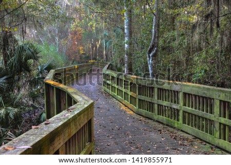 Painted path, wooden path in north Florida woods #1419855971