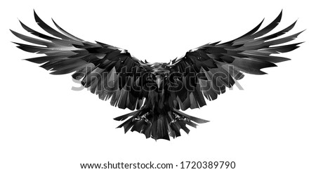 painted raven bird in flight on a white background Сток-фото ©