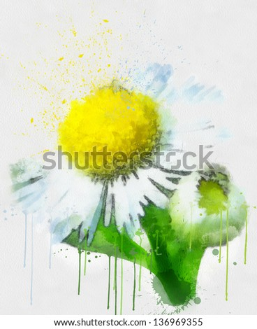 Painted watercolor camomile