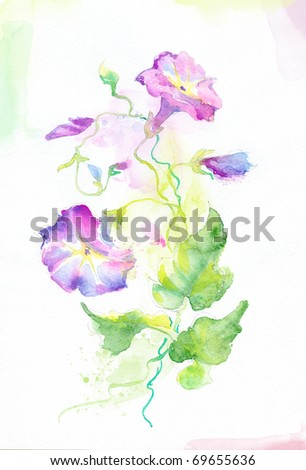 Painted watercolor convolvulus flowers