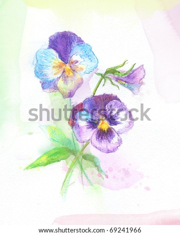 Painted watercolor pansies