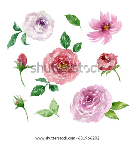 Painted watercolor set of flowers on white background. Elements for design. Valentine's Day, Mother's Day, Wedding, Birthday