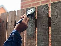 Painting garden fence using a paint brush. The fence is wooden and the paint is sage coloured. This is in England.