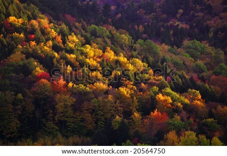 Painting like autumn colors on a hill slope