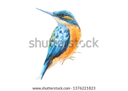 Painting of hummingbirds, watercolor on a white background.Cute little bird illustration, orange and blue, bright colors, isolated on white.Painting of poultry living in the forest.