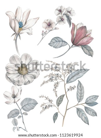 Paintings of light color pencils show a variety of flowers, including elegant magnolia flowers, blue flowers, unusual small wildflowers, and various gestures of the leaves