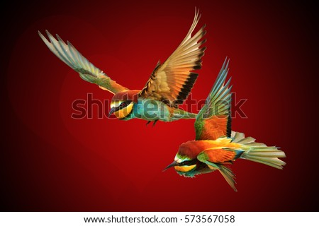 pair colored birds and hearts shape concept for Valentine's Day,love, forever together, flying lovers, dreams, happiness