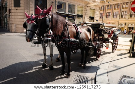 pair horses carriage in city of love, vienna, vintage transportation workers for sightseeing.