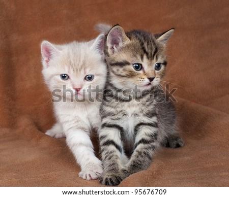 Pair of beautiful kittens - stock photo