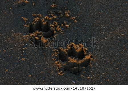 Pair Of Canine Dog Tracks In Beach Sand #1451871527