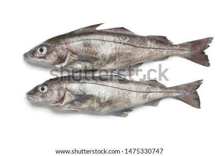 Pair of fresh raw whole haddock fishes isolated on white background ストックフォト ©