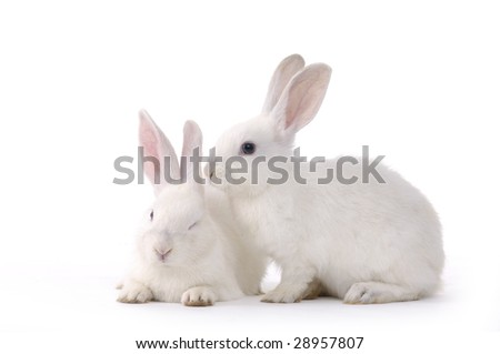 pair of funny rabbits