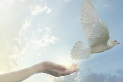 Pair of hands releasing white pigeon bird freedom wings flying on blue sky background.