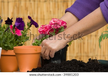 Pair of hands taking care of flowers
