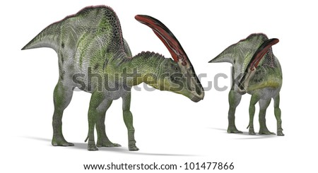 Pair of herbivorous dinosaurs