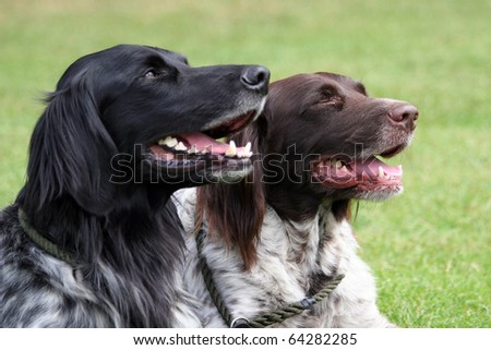 pair of hunting dogs